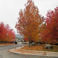秋は季節の移ろい