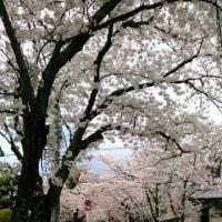春なのに~♪