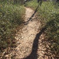 西武鉄道街並みウォーク 早春の狭山公園から空堀川を歩く!