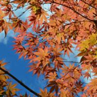 秋の西公園