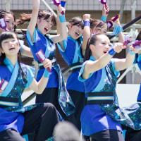 2017踊っこまつり  5月4日 本部競演場 明石海峡とびうお飛っ飛隊2