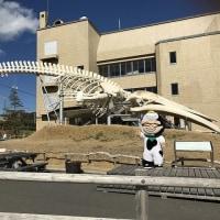 南総ファーマーズフェスタ㏌道の駅和田浦WA・O!