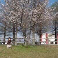 犬と子と桜