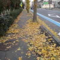 歩道の黄葉