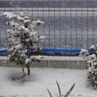 今、雪が降ってます