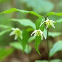今日の森から野の花を・・