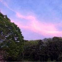 夕方の空と風と花と