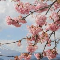2017.2.11 まつだ桜まつり