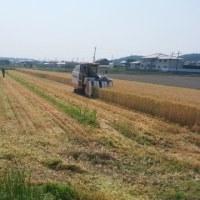 麦刈と取材