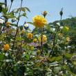 吉海のばら園