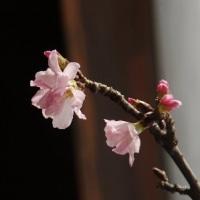 2月23日(木)、じゃーん、復活!のfika.