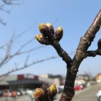 もうすぐ春ですね〜  だから… ^_^