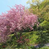 桜から新緑の季節へ
