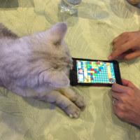 まさか、、猫もゲーム好き