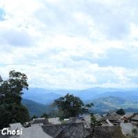 雲南古茶樹ツアー その5 景邁山の古茶林へ
