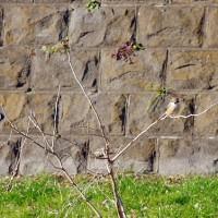 冬の野鳥⑦