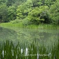 新緑の季節 -3-