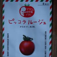 「ピッコラルージュ」を蒔種、「キャンディチェリー」苗の移植