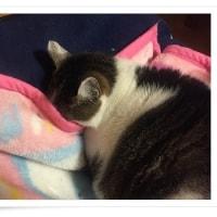 ふかふか毛布の活用法