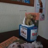 盲導犬育成募金のご協力、ありがとうございました☆