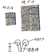 ゼロ磁場 西日本一 氣パワー・開運引き寄せスポット またNHKで認知症(5月18日)