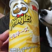 テキトーなジョグからの、坂練!!!今日は10本だ!!!!
