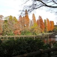 墓参の旅 その3 (東京 井の頭公園)
