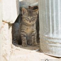相島ではこの春生まれの子ネコたちを見かけるようになりました! @相島のネコたち