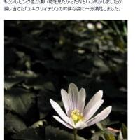 10年前の今頃訪れていた小石川植物園 見つかったユキワリイチゲ