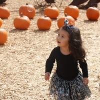 pumpkin patch 2016