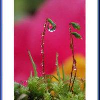 落椿の花しずく