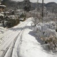 散歩道に雪。