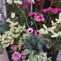 4/23 西宮緑化植物園へ弁当持参で家内と春の花散策にいく