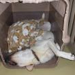 【今週のオレオ と クッキーの寝顔・寝姿】