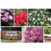 20120525花の美術館001。花は良いですね。