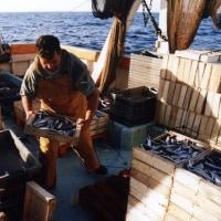 地中海漁業計画を提示  EU審議会