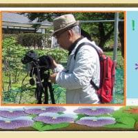 2016・11・30 広島:花鳥風月>三倉岳県立自然公園へ紅葉狩り