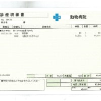 伽羅の肝炎&脳卒中日記(17)