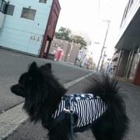 青色回転灯防犯パトロール【西連合町内会】