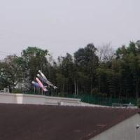 ♪2006/04/30 こいのぼり