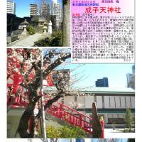 散策 「東京南西部-256」 成子天神社