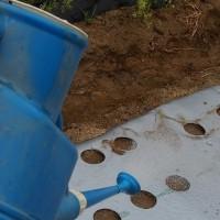 ニンジンとゴボウ畝に散水する。