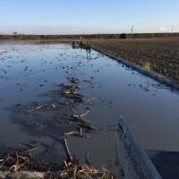 ポンプ掘り、新しい田んぼ