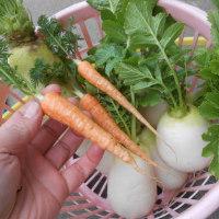 今年は長雨の影響で野菜の価格が高騰しました。