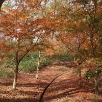 第121回古都旅歩き 丹波自然公園