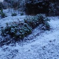 朝は雪 まだ春に行ったり来たり