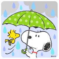 予報通り雨
