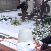 雪の日の 孫&猫&父