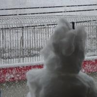 広島は大雪