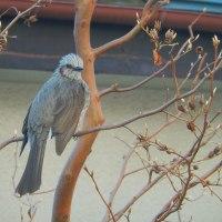昭島の野鳥